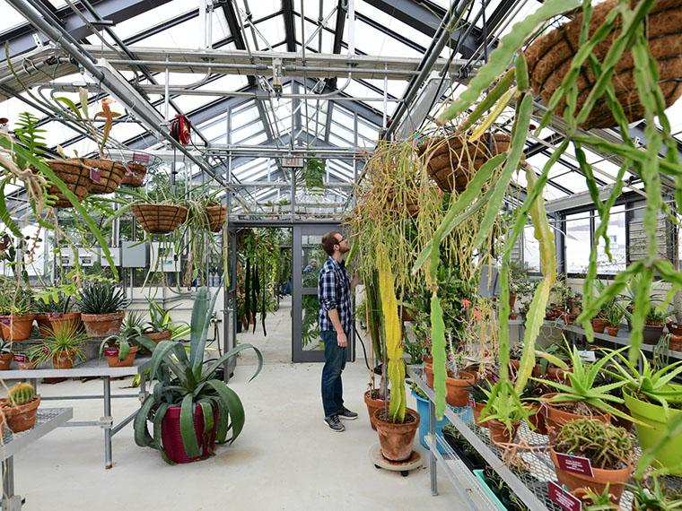 Interior of Oberlin's greehouse located in the Science Center