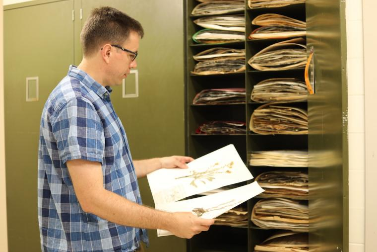 Reborn Herbarium is a Boon to Biodiversity   Oberlin College and ...