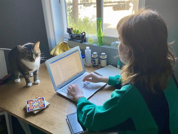 student typing on a laptop with a cat by her side.