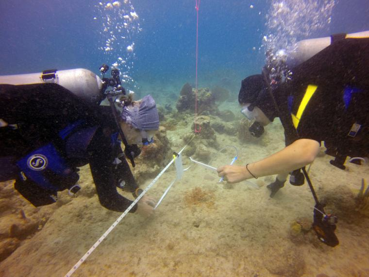 Divers with air tanks examine a coral reef.