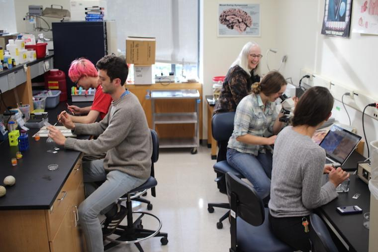 Four students and Prof. Thornton work in the lab.
