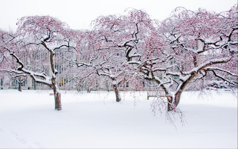 Snow-covered trees in front of a college building