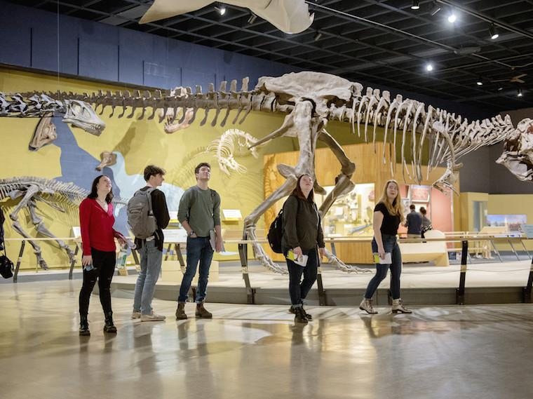 Students walk through a gallery with dinosaur skeletons on exhibit.