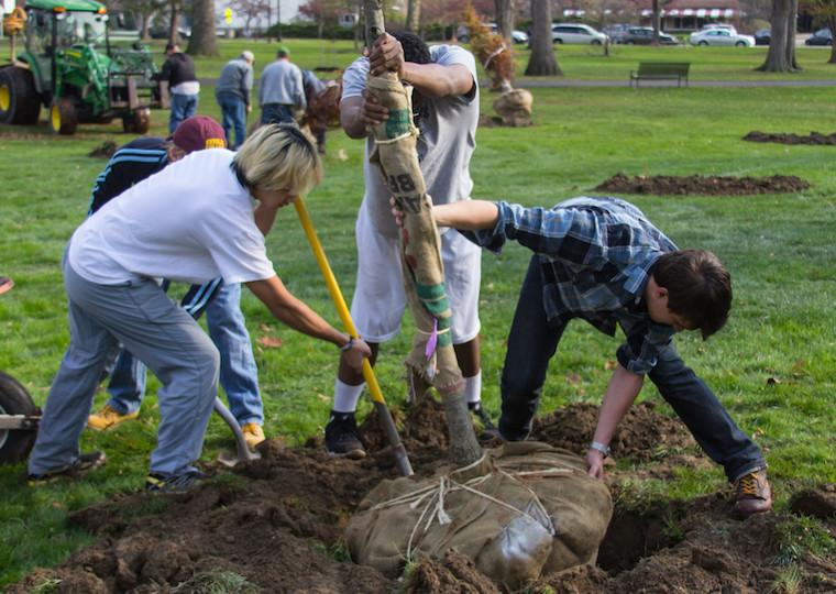 Students plant a tree.