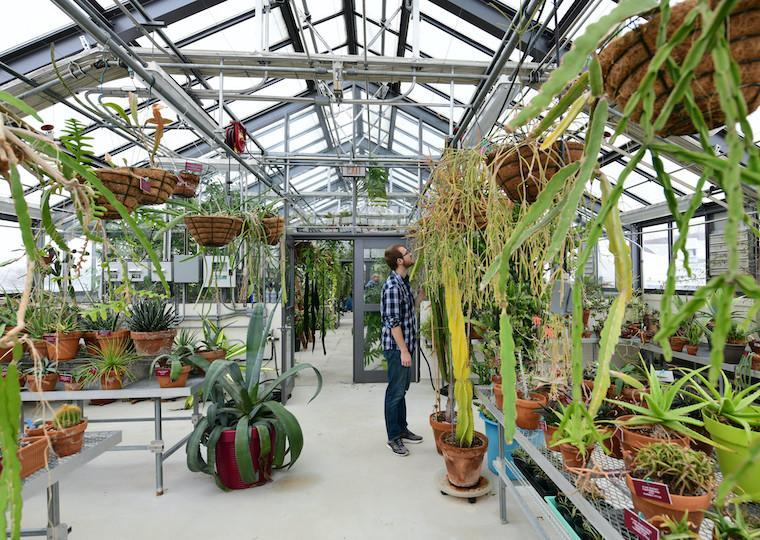 A students looks at plants in a greenhouse