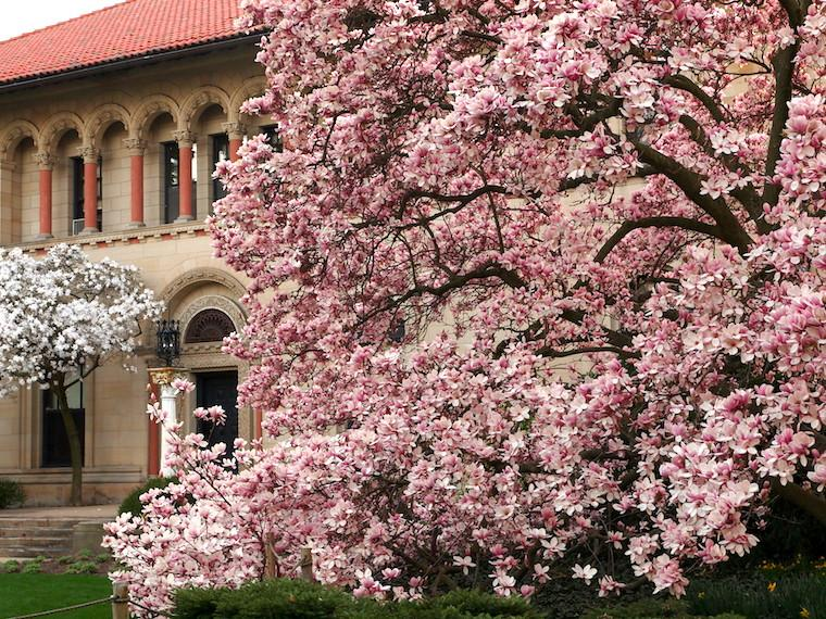 The Cox Administration Building beside a flowering tree in full bloom