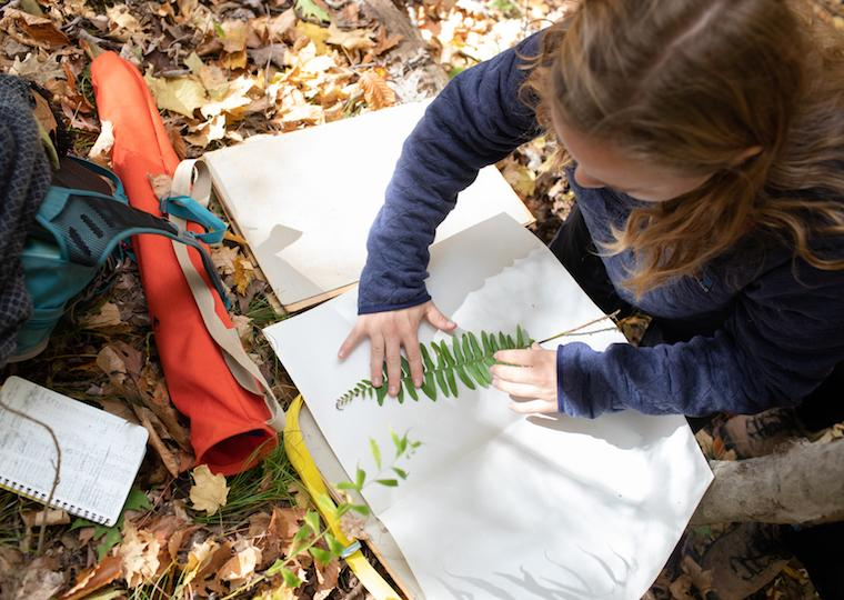 A student presses a fern onto a large white page.