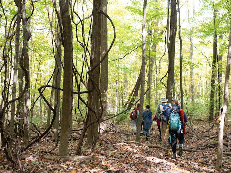 A group walks through a woody park.
