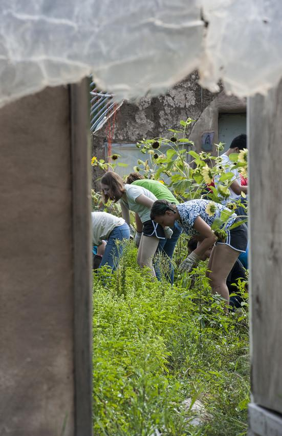 Photograph of people working in a garden.