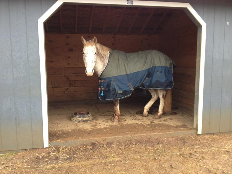 Photograph of a horse in a stable.