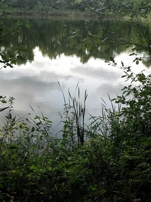 A view of the reservoir in the Arb.