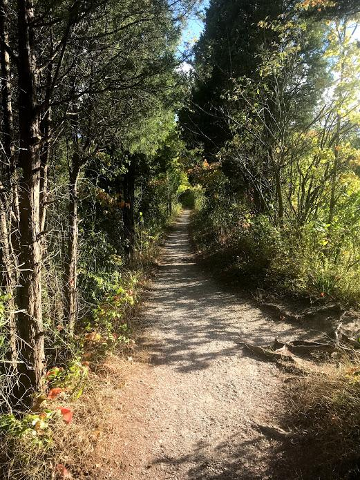 A sunny trail in the Arb surrounded by trees.