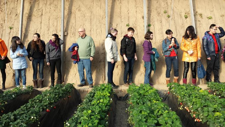 A line of people standing behind rows of plants